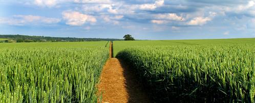 summer sky green field clouds canon landscape wheat 365 footpath g12 2013 canong12 2013x365