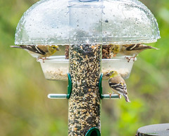 branch(0.0), tool(0.0), bluebird(0.0), wildlife(0.0), bird feeder(1.0),