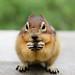 Squirrel by make_make