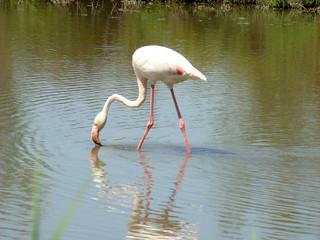 039 flamingo's
