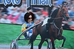 animal sports, racing, stallion, equestrian sport, sports, race, horse, horse harness, jockey, harness racing,