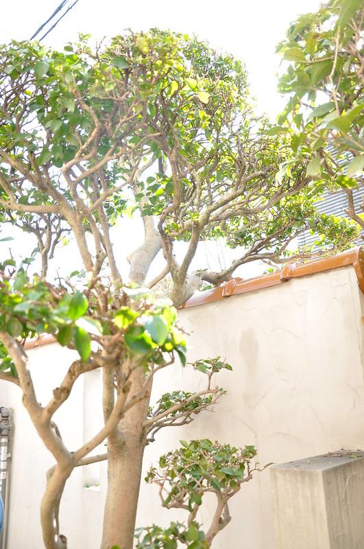 庭木に肥料をやる時大切なことは枝の伸びている方向