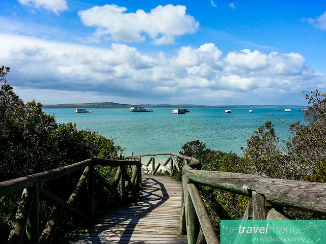 West Coast National Park and Jacobsbaai 2013-38