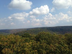 Fall Foliage Fun - Cook Forest