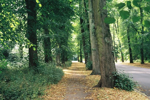 Trees_Beechwood Avenue_Earlsdon_Coventry_Aug13