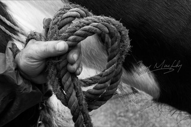 Horse Fair Mohill BW TMP_5058