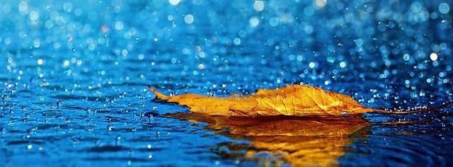 Leaf In Rain Facebook Cover Photo