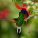 Stripe tailed hummingbird by Through The Big Lens