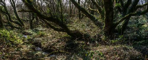 trees france woodland moss woods frankreich stream bretagne ivy breizh swamp brook bog breton restou restougouin
