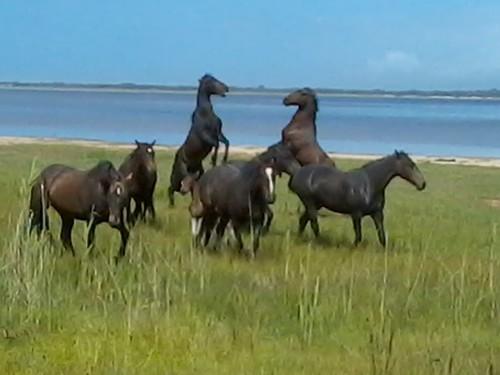 Bot River Wild Stallions challenge for leadership