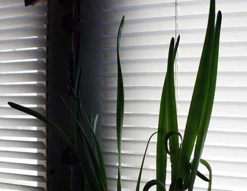 plant against the blinds