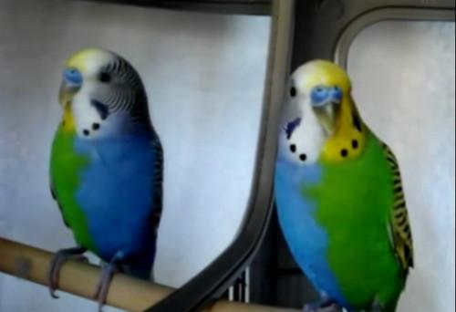 Half-siders: A tale of two birdies | @GrrlScientist