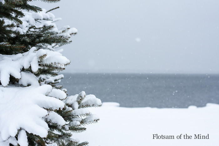 Tree, Snow, and Bay - Flotsam of the Mind