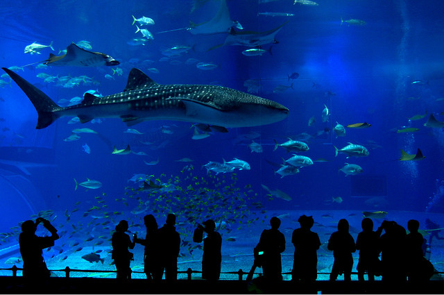19.Churaumi Aquzrium is teh popular sightseeing spot