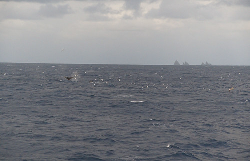 075 Walvissen