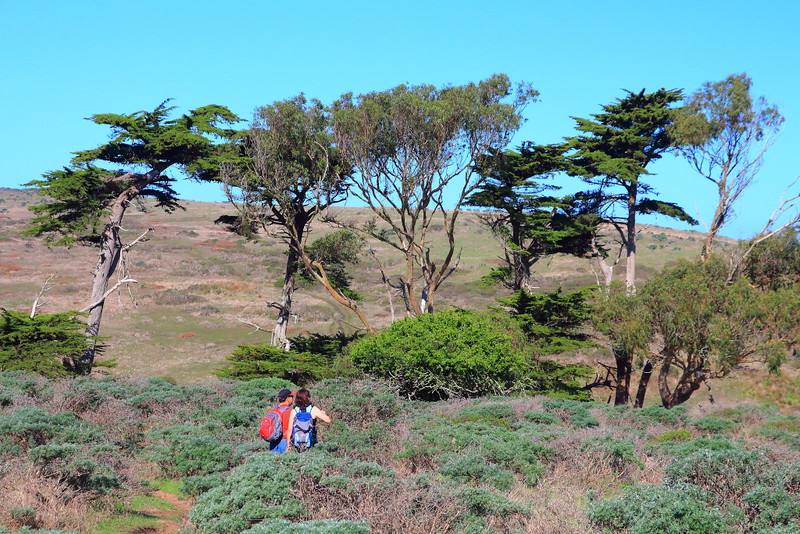 IMG_2750 Tomales Point Trail