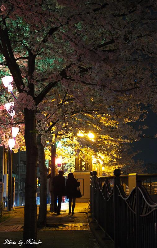 夜桜 -大岡川- by Nakabo