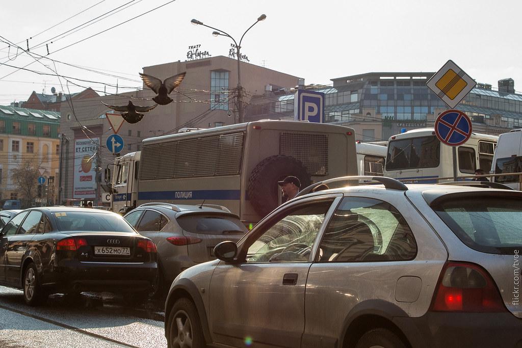 Автозаки и голуби