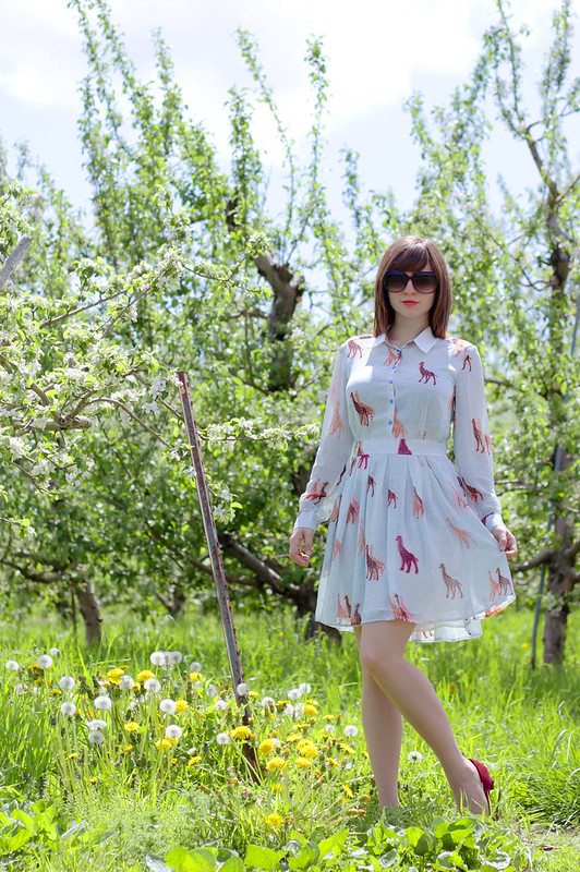 giraffe dress, giraffe print dress, modcloth giraffe dress, modcloth dress, 60s style, ModCloth Walk Tall Dress, style blogger, fashion blogger, orchard photoshoot, orchard, swing the day away