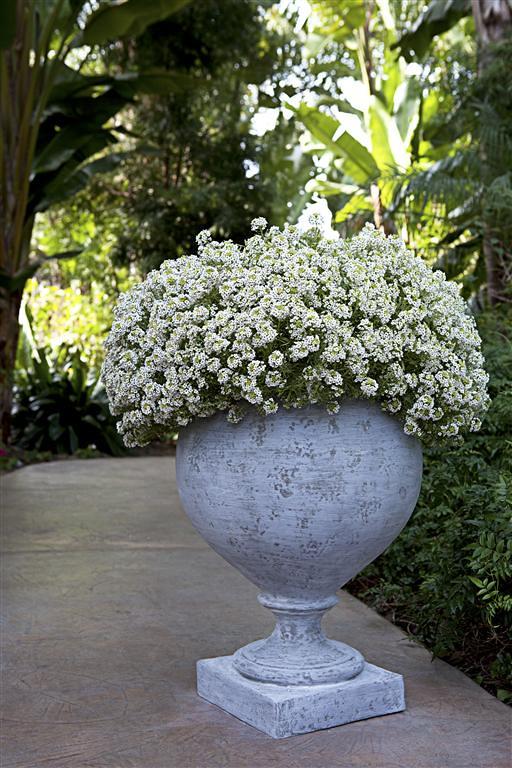 Pedestal Bowl Urn