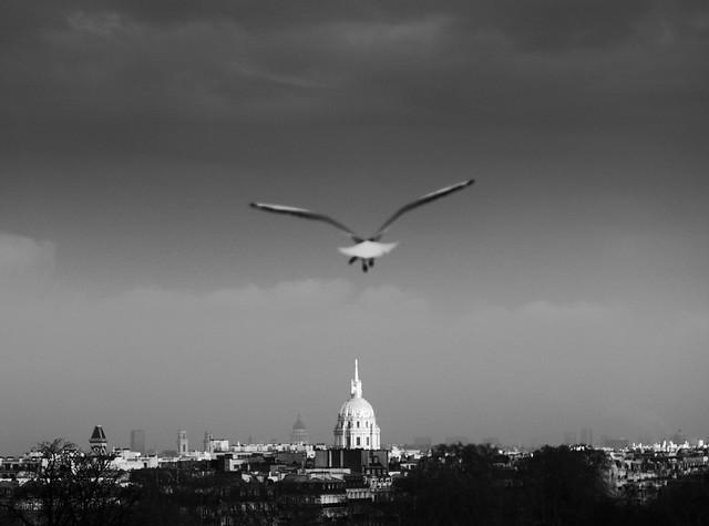 Bird in the sky of paris