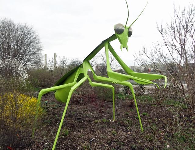 ohio-state-praying-mantis