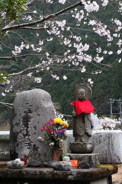 お地蔵様と桜