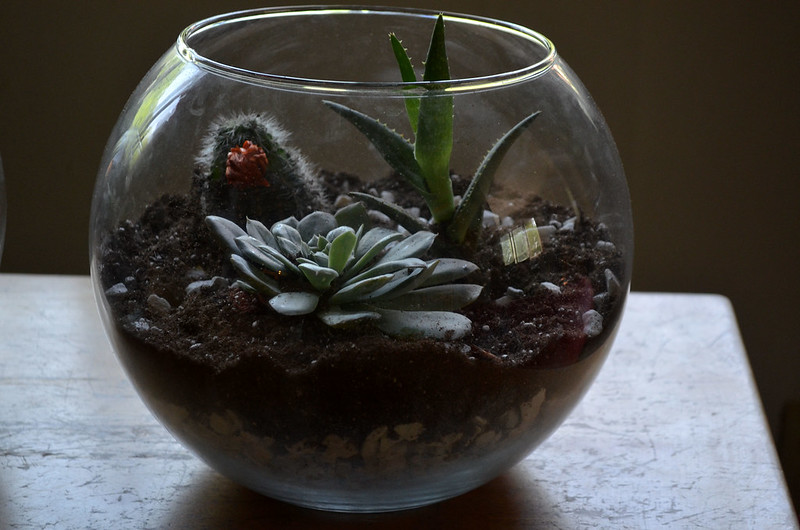 DIY Glass Terrarium 13