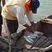 Dividing up the fish from the catch - repartiendo el pezcado; playa de San Mateo del Mar, Distrito Tehuantepec, Región Istmo, Oaxaca, Mexico por Lon&Queta
