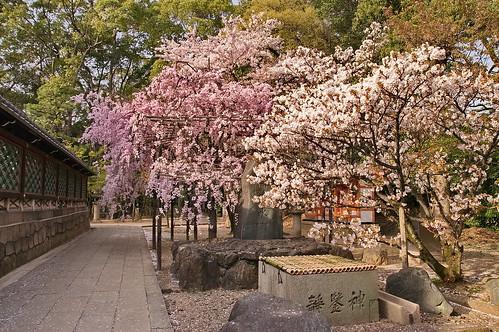 【写真】2013 桜 : 御香宮神社/2019-10-26/IMGP9749