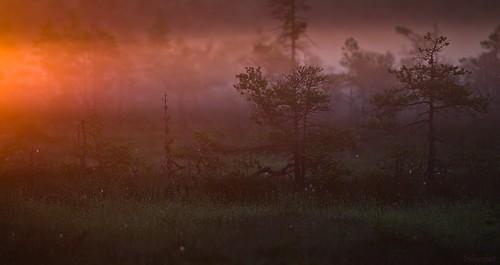 park morning night sunrise finland nikon 300mm national swamp 28 nikkor f28 jyrki kansallispuisto yö d600 salmi pyhtää valkmusa