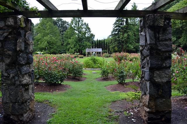 9537969667 b4ff53a497 for Raleigh little theater rose garden