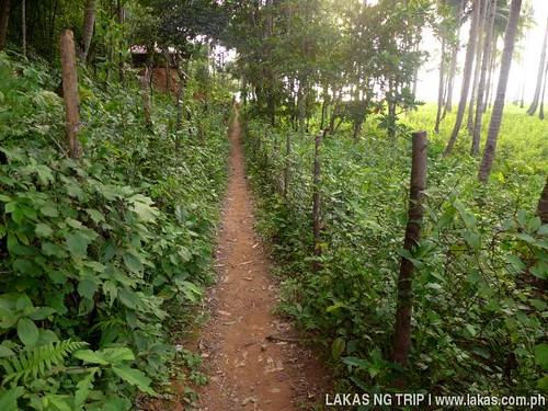 Trail becoming narrower to Maremegmeg Beach in El Nido, Palawan, Philippines