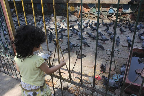 Nerjis Feeding The Pigeons Bandra Talao by firoze shakir photographerno1