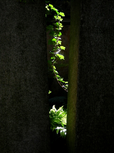 Jüdischer Friedhof Berlin_2013_47