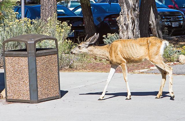 Deer_0297