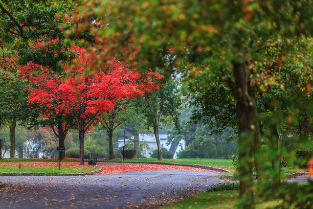 Fall Foliage at Ferncliff Cemetery