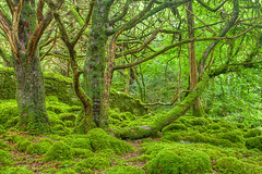 Emerald Forest - Killarney National Park