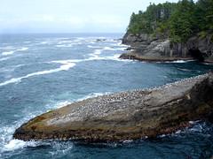 Gull-covered Rocks