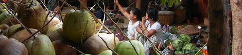 Nyaung Oo Market coconuts