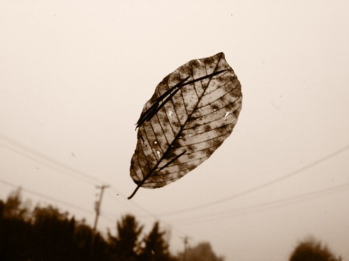 leafonthewind by Nature Morte