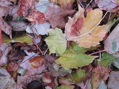 Swept-up leaves, Abbaye de Timadeuc