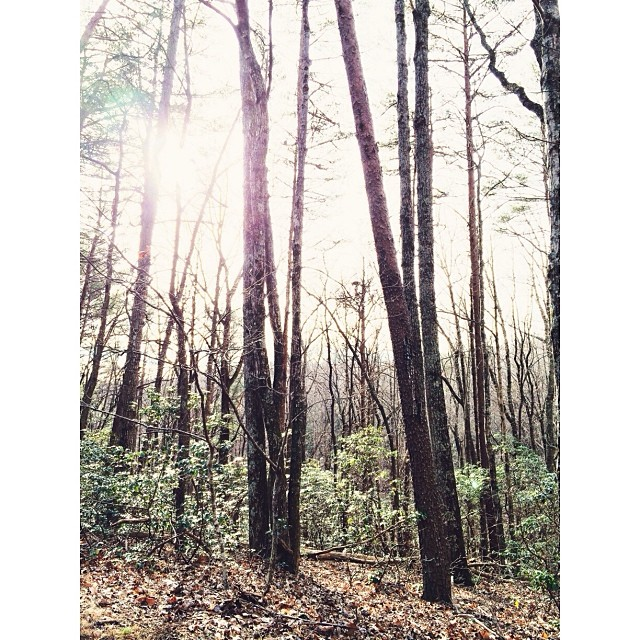 Lots of bare #trees.  #pictapgo_app #hiking #amicalolafalls #familyvacation
