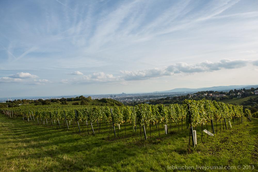 Венские виноградники возле Каленберг
