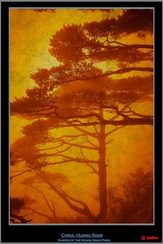 world china old blue mountain get heritage colors yellow fog pine canon vintage nebel alt retro unesco sl list bonsai duotone uni shan blau kiefer huangshan huang anhui pinus 40d canon40d sagelight sagelighteditor pmbvw hwangshanensis worldgetcolors huangshanberg