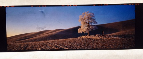 Palouse Panoramic Teaser