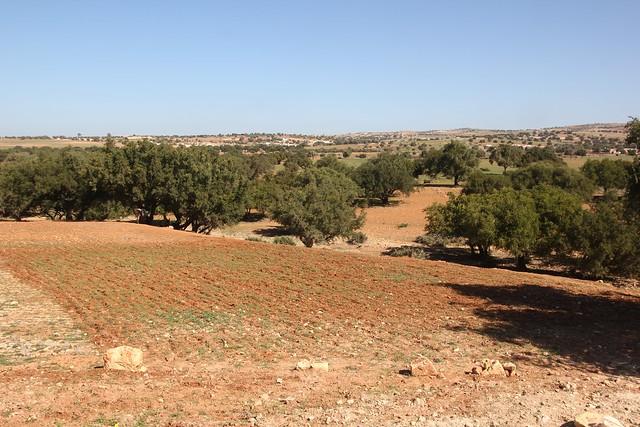 240 - Camino a Essaouira