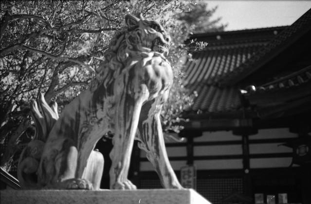 尾上神社狛犬・吽 - Guardian lion-dog at Shinto shrine
