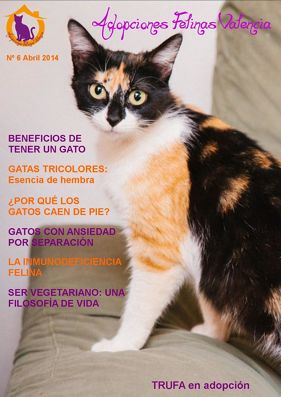Revista nº 6 Abril 2014: Gatas tricolores, esencia de hembra 13662745954_ee2a469eb3_c