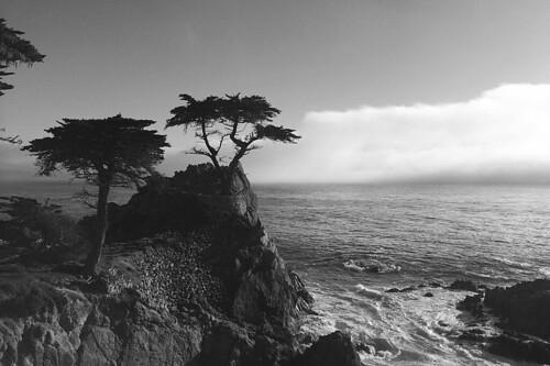 The Lone Cypress - Fog